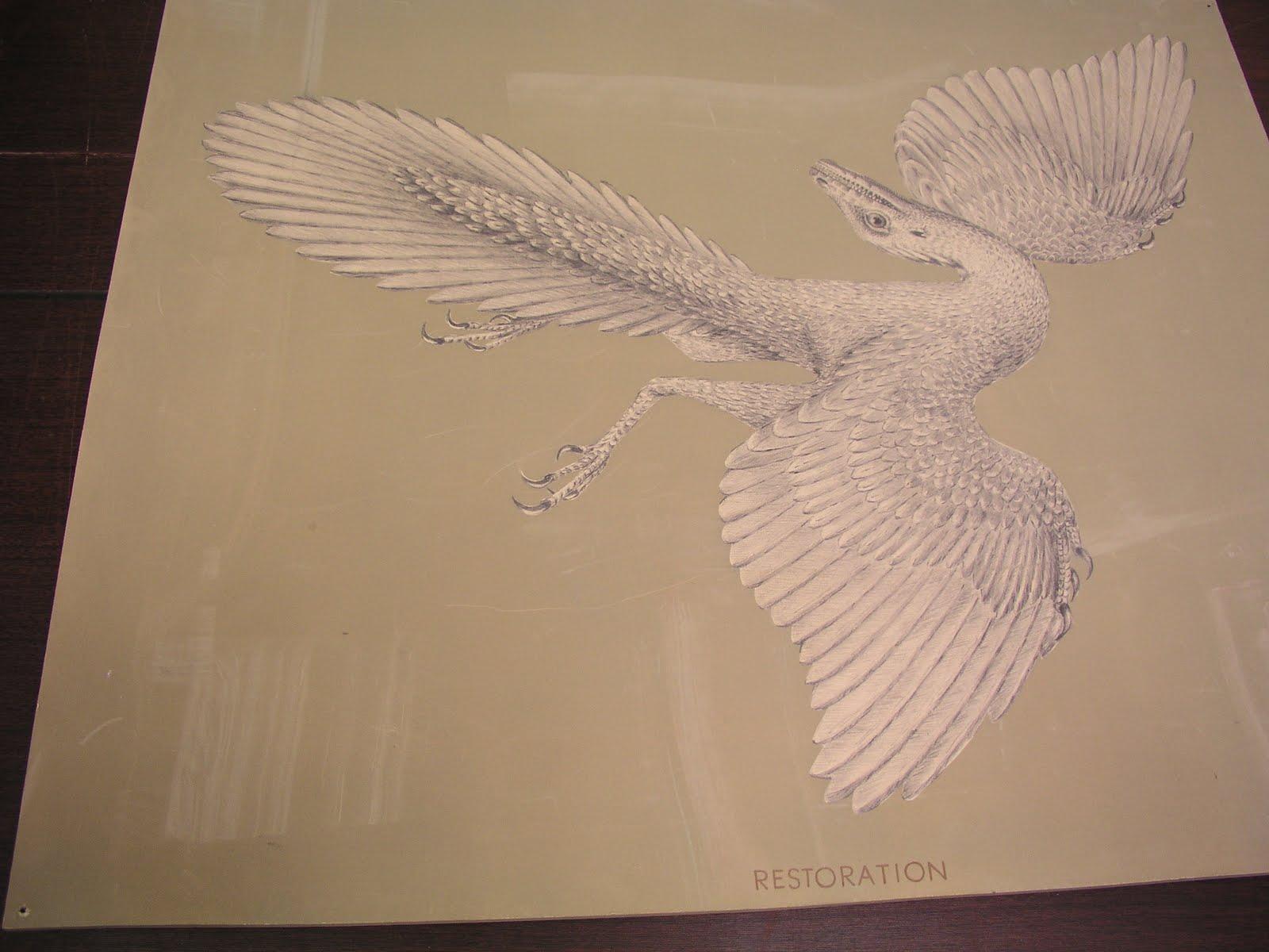 Kuş evrimi, iklim ve levha tektoniği ile bağlantılı