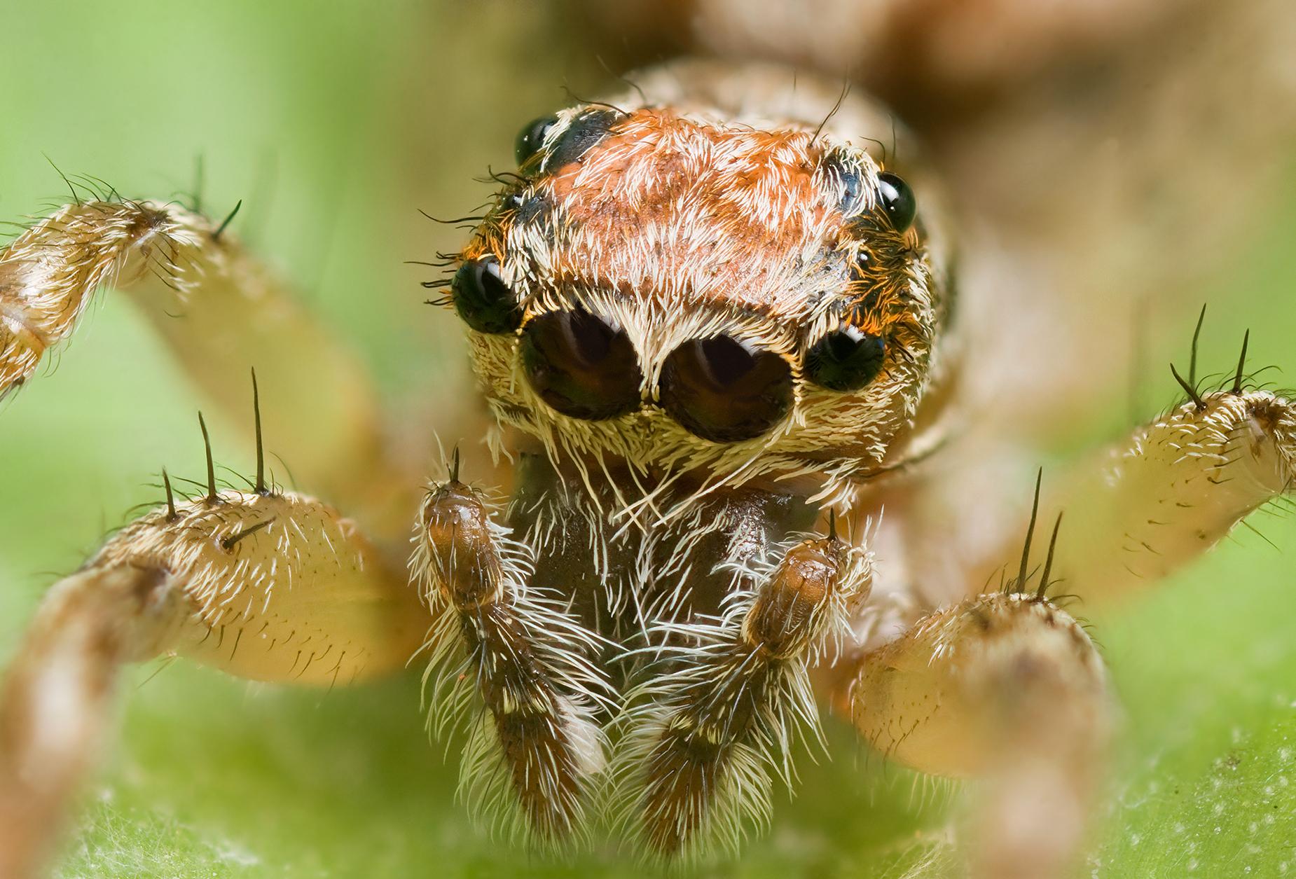 Örümcekler, sakızlar ve hemoroidin ortak yönü nedir?