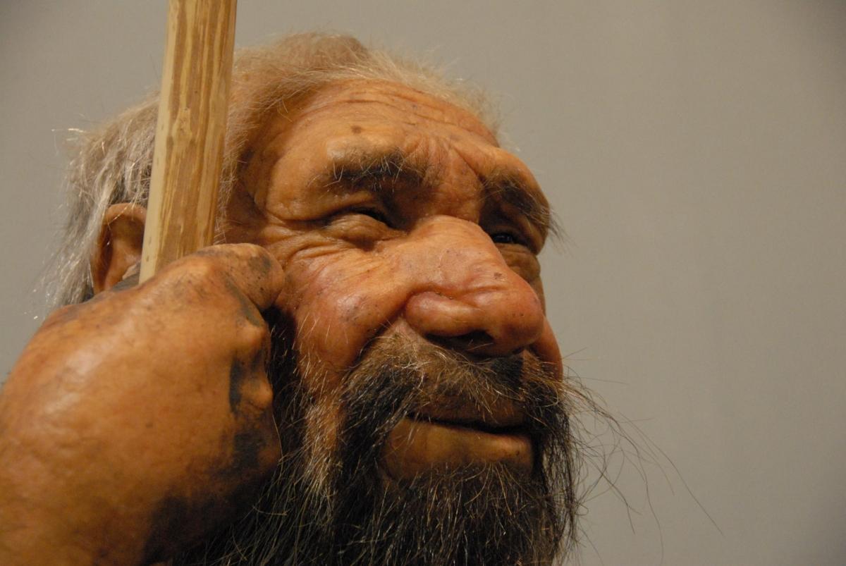 Alerjilerimiz, Neanderthal akrabalarımızdan miras