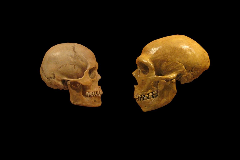 Modern insanlar ve neandertaller ilk olarak 100 bin yıl önce çiftleşti
