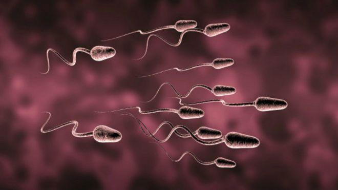 Farelerde kök hücreden sperm yapıldı