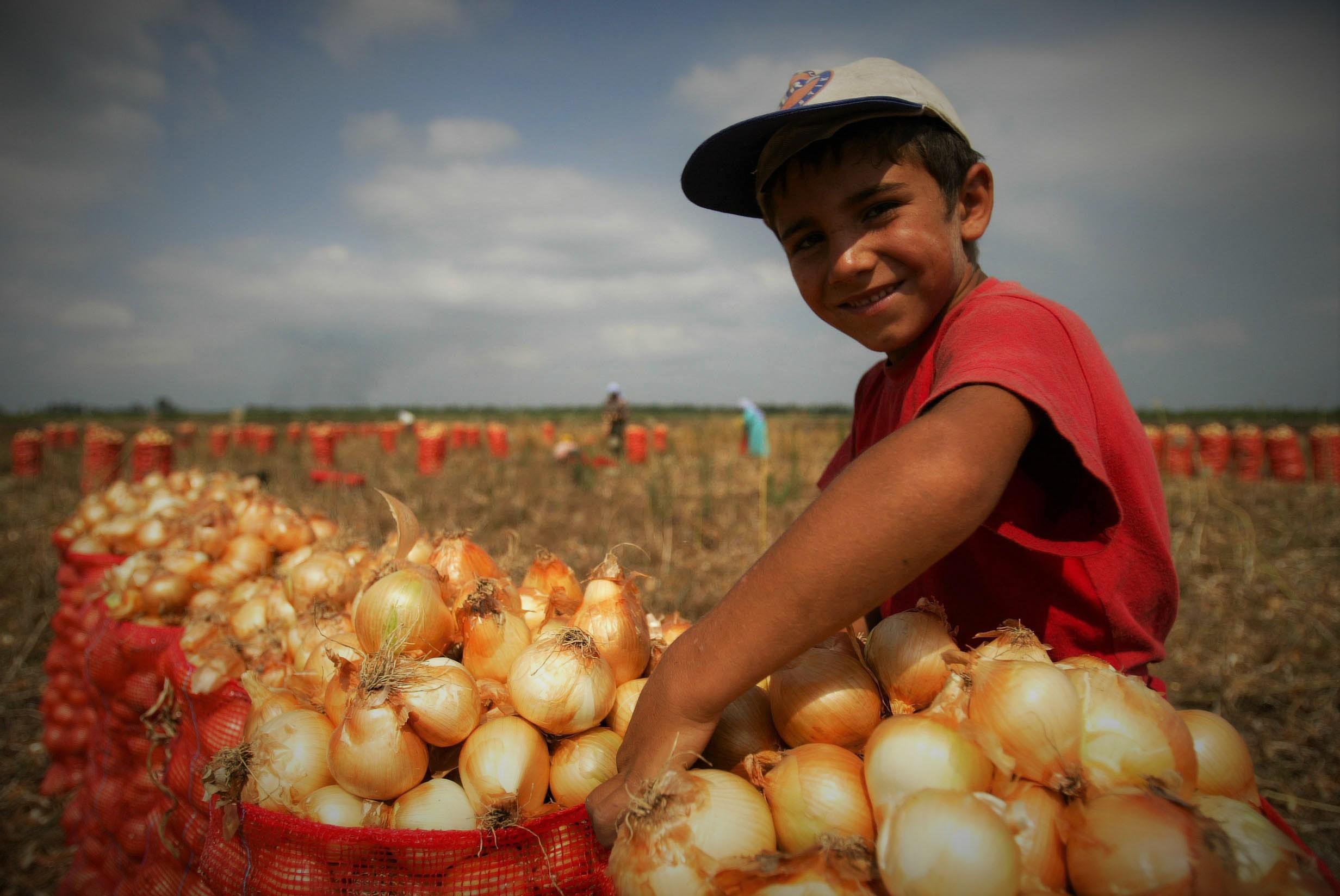 Mevsimsel tarım ürünlerinde Şubat'ın zam şampiyonu soğan