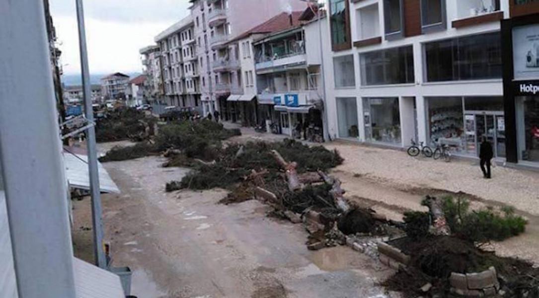 AKP'li vekilden timsah gözyaşları: Belediye yarım asırlık çam ağaçlarını kesti