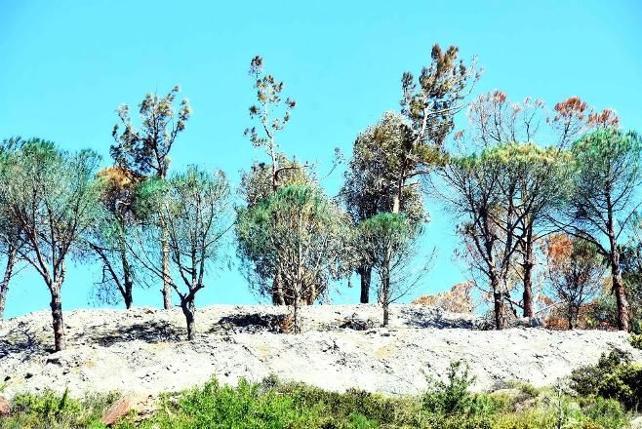 Doğa dostu proje buraya kadarmış: Boyadıkları ağaçları da kestiler!