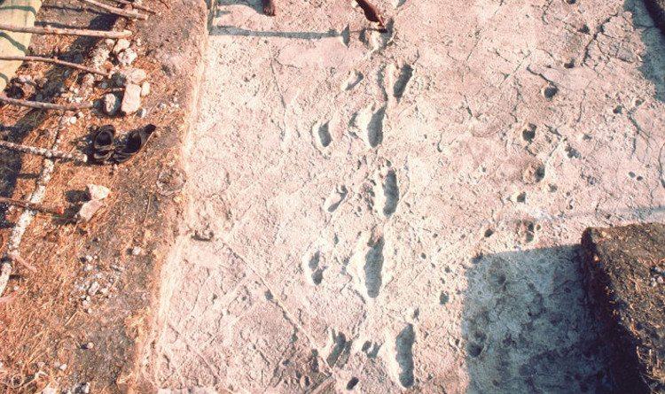 Laetoli ayak izlerinin sırları çözülüyor