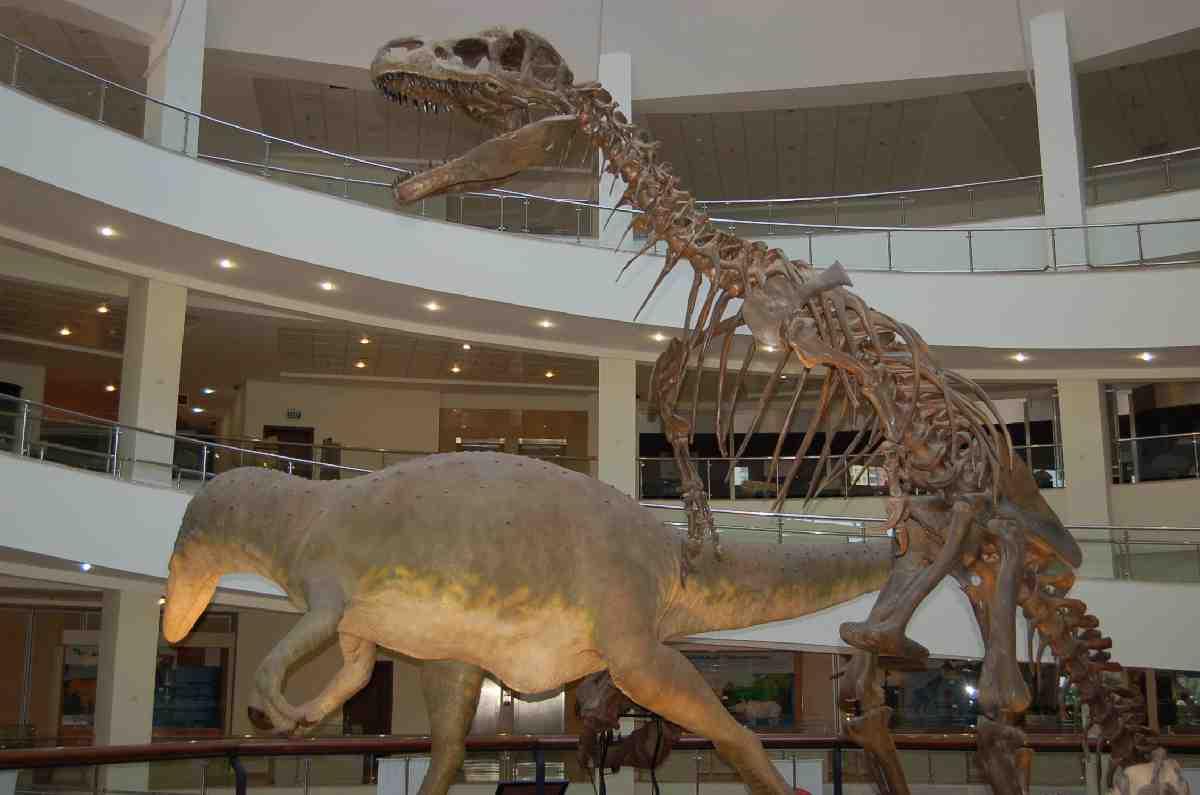 MTA Tabiat Tarihi Müzesi'nden Evrim Bölümü kaldırıldı