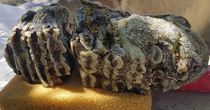 Konya'da 2.5 milyon yıllık fosil bulundu