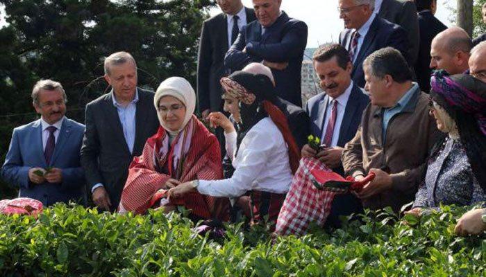 Danıştay'dan 'çay toplama' kararı