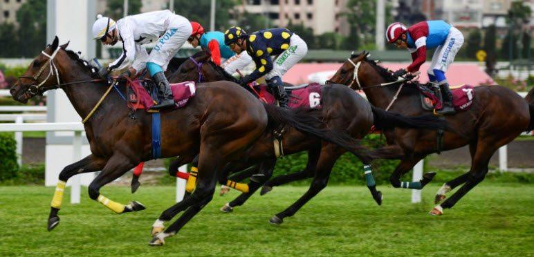 TJK kurucusu, Bakanlığı göreve çağırdı: Atlarım sucuk oluyor!