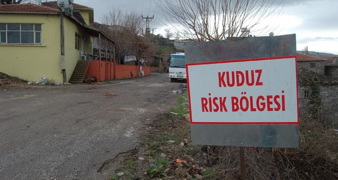 Adana'da kuduz karantinası