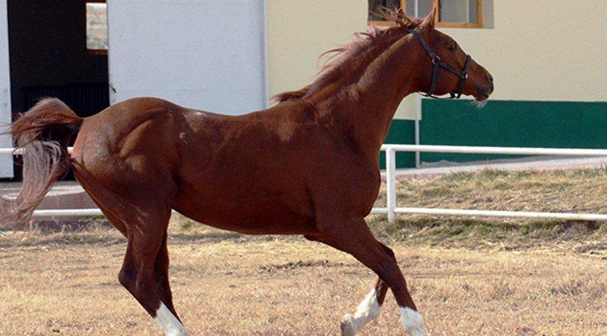 Atlara da 'FETÖ' operasyonu