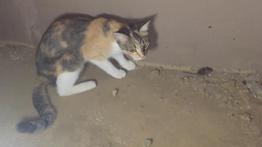 AA'dan 'habercilik' başarısı: Kedi fareyle oynadı