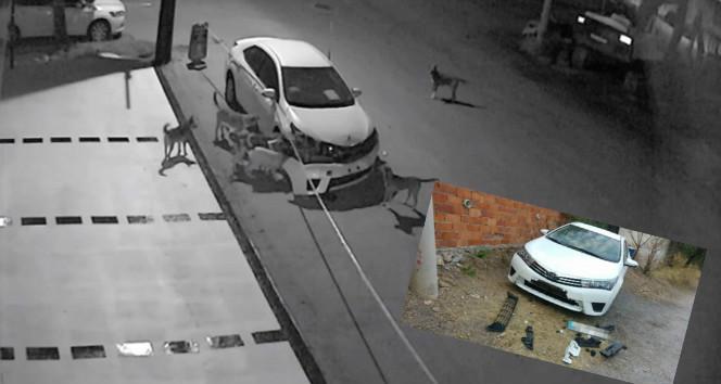 Bir ilde daha otomobile köpek saldırısı