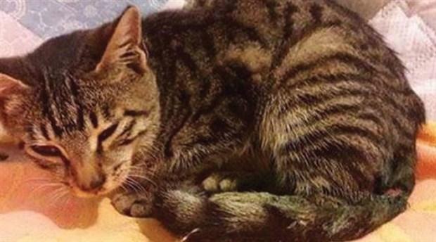 Utandıran bir Türkiye haberi: Tecavüz edilen ve bıçaklanan kedi kurtarılamadı