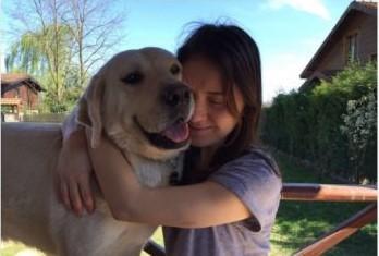 VİDEO | AKP'li belediyeden hayvan düşmanlığı: Evcil köpekleri bile zehirlediler