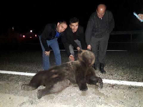 Arabanın çarpıp öldürdüğü ayıyla 'hatıra' fotoğrafı çektirdiler