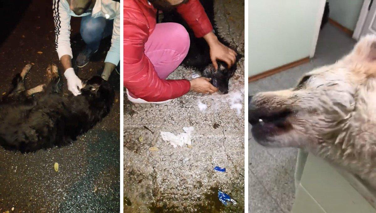Sapanca Belediyesi'nden köpeklerin zehirlenmesine açıklama