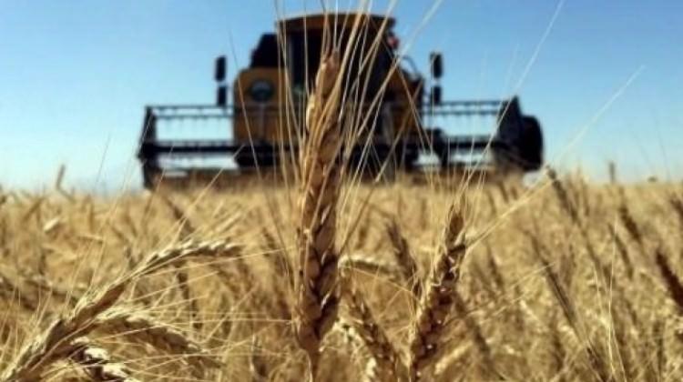 Tarım ülkesi Türkiye, 90 bin ton buğday ithal edecek!
