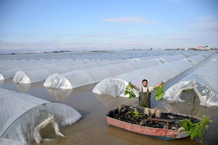 Mersin'de sel altında ekin hasadı: Kayıkla hasat yapıyoruz, tarih bizi yazsın
