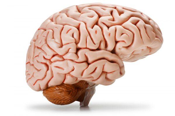 Kadın ve erkek beyinleri arasındaki farklar ortaya çıkıyor