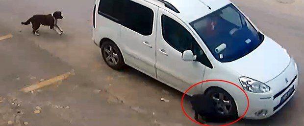 Köpekleri kasti olarak öldürmeye çalışan sürücü sadece para cezası aldı