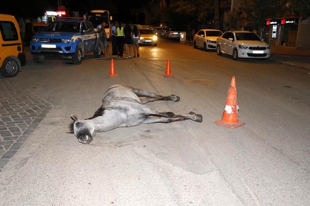 Sıcak ve susuzluktan ölen atını bırakıp kaçtı