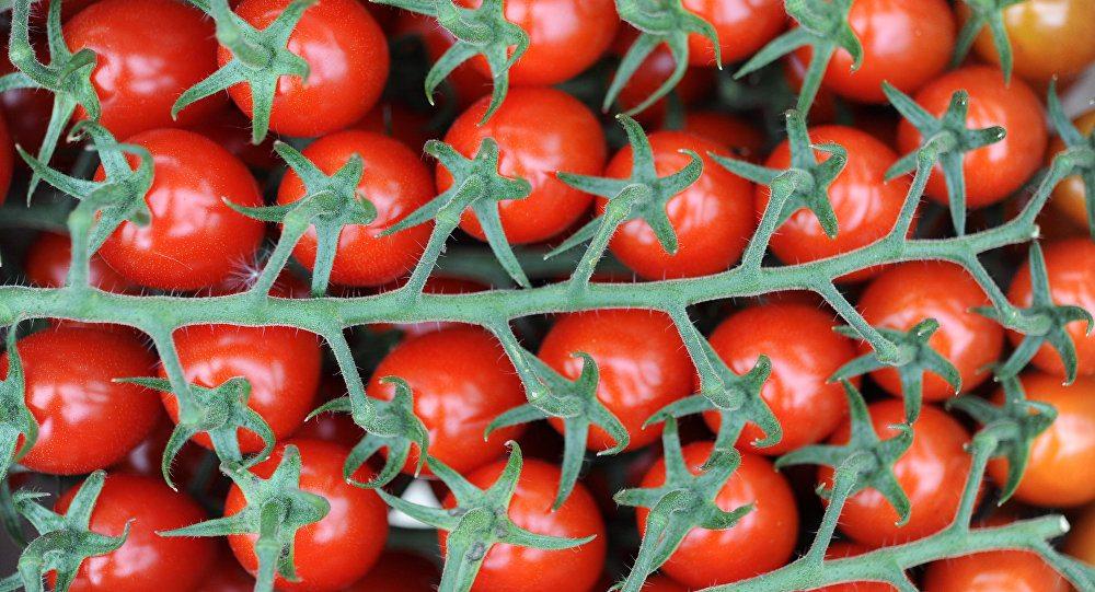 Rusya: Türk domatesini kabul etmeyeceğiz