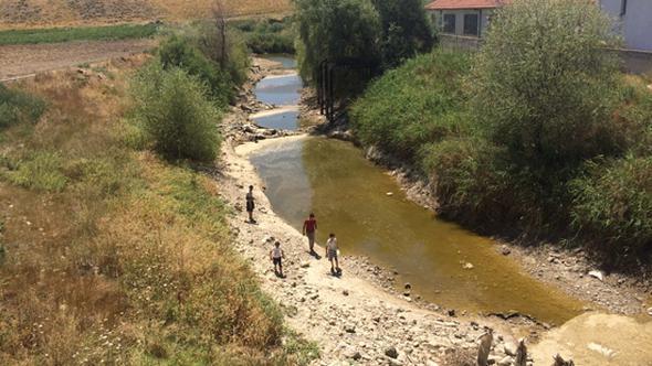 Sakarya Nehri kurudu, binlerce balık öldü