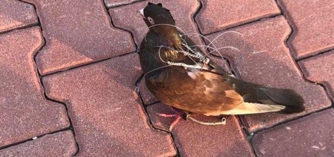 Cezaevinde 'haberci kuş yakalandı' iddiası