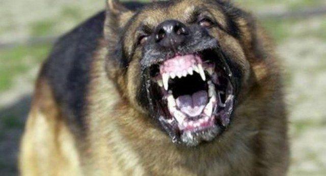 Oxford profesörünü sokak köpekleri yedi