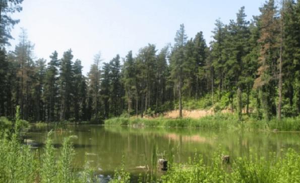 Sakarya ve Kocaeli'de ormanlara giriş yasağı geldi