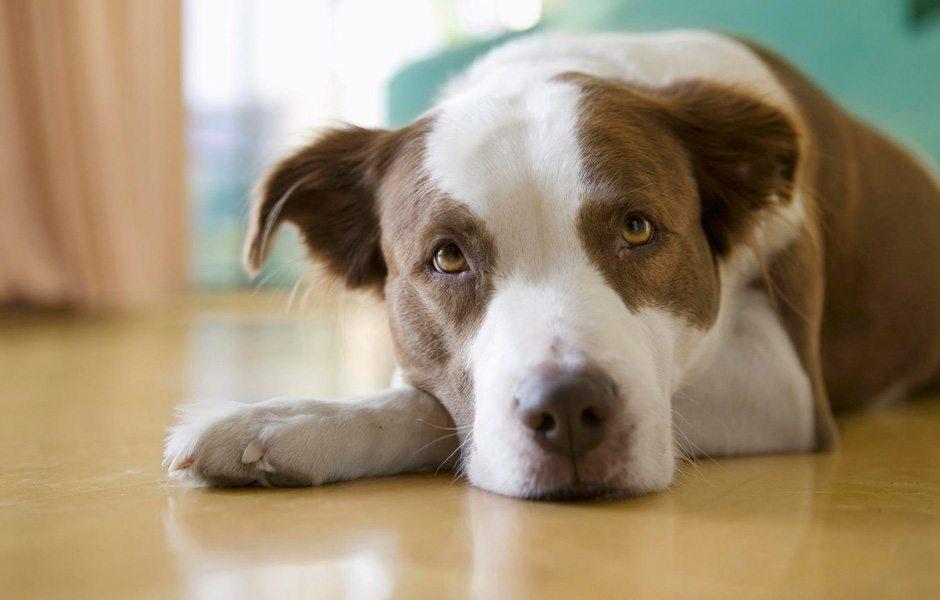 Hasta köpeğine bakmak isteyene ücretli izin verildi