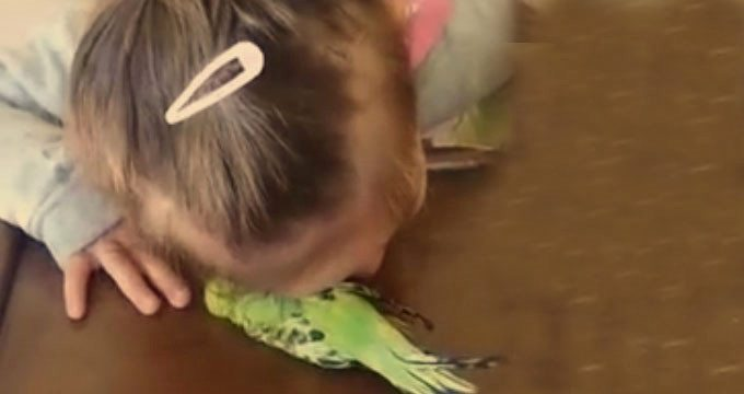 VİDEO   Annenin'Kuşu sen öldürdün' suçlamasına tepki yağdı