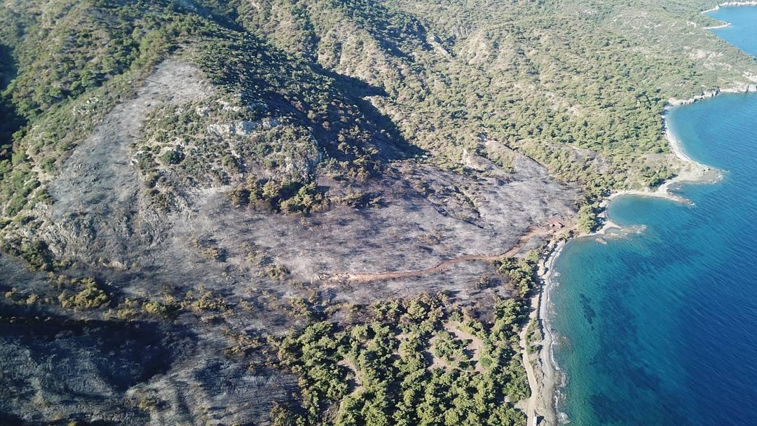 Datça'da kundaklama: 40 futbol sahası büyüklüğünde orman yakıldı!