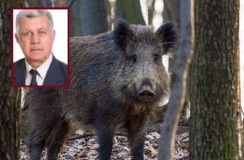 AKP'li eski başkan domuzlara tuzak hazırlarken kendini vurdu, ağır şekilde yaralandı