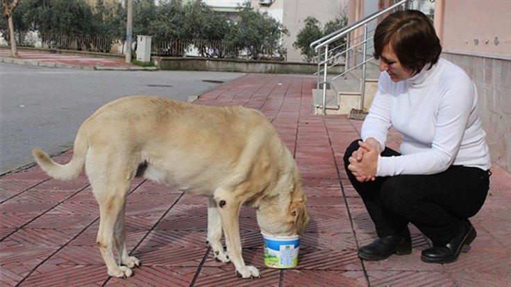 Sokak köpeğini besleyen kadına saldırdılar!