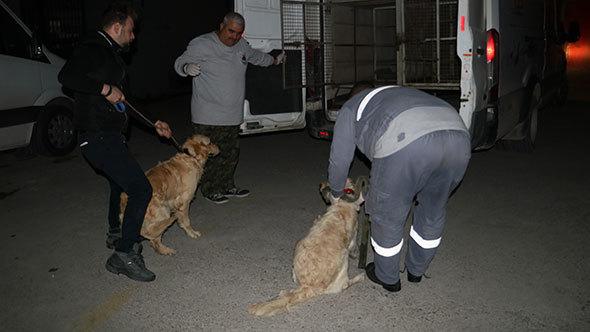 Köpeklerini kemerle döven şahsa gözaltı
