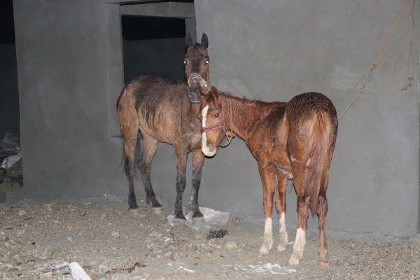 Polis ekipleri, atlar için geç kaldı...