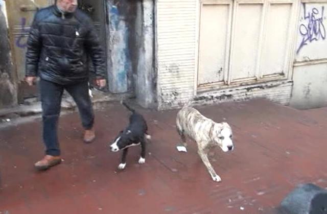 Taksim'deki metruk binada dövüş köpekleri bulundu
