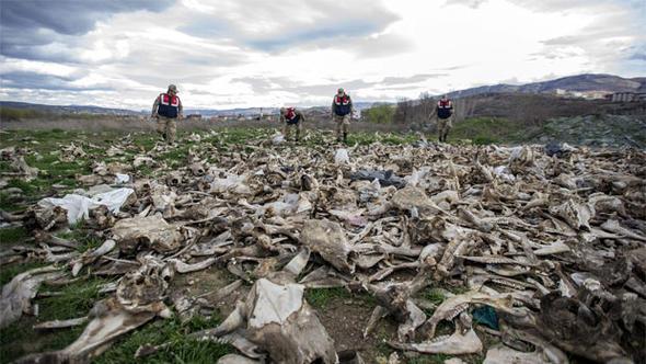 Boş arazide yüzlerce kafatası ve kemik!