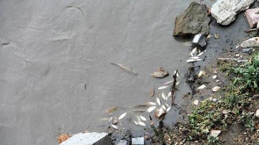 Yeşilırmak'ta toplu balık ölümleri