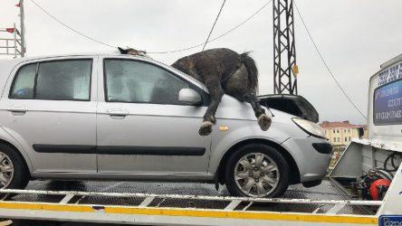 İstanbul'da otomobilin çarptığı 3 at feci şekilde öldü