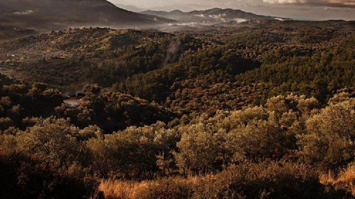 'Kanal İstanbul' uğruna 458 hektarlık ormanlık alan yok olacak