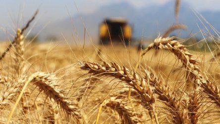 AKP Cumhuriyet tarihinin buğday ithalat rekorunu kırdı