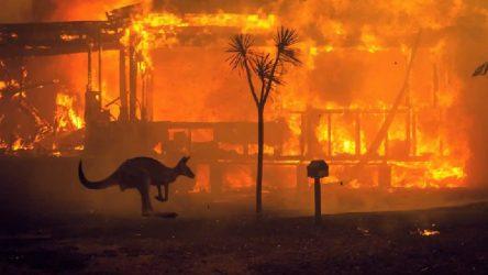 Yangınlar Avustralya'daki ormanların yüzde 21'ini yok etti