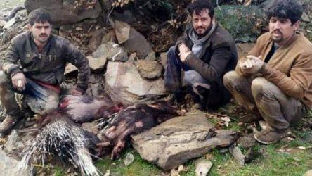 Manisa Salihli'de'eti şifalı' diyerek oklu kirpileri katlettiler