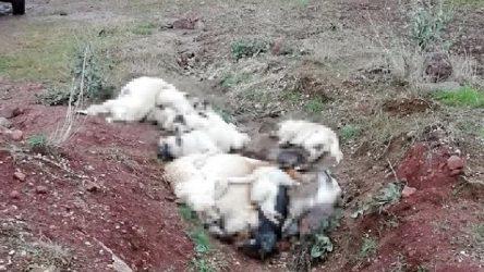 Banaz'da çok sayıda sokak köpeği ölü bulundu