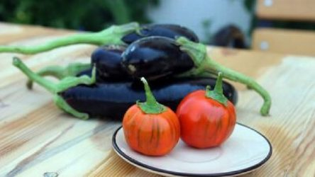 Zam şampiyonları domates ve patlıcan oldu
