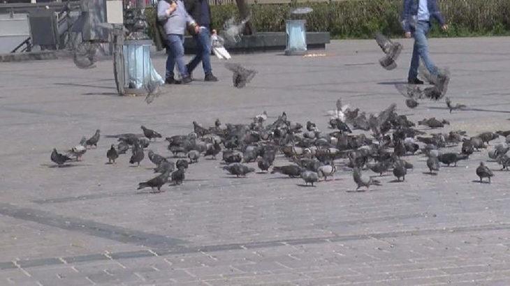 Eminönü'nde güvercinleri ezen şahıs serbest bırakıldı