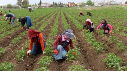 Mevsimlik tarım işçilerine 'Ölün' deniliyor